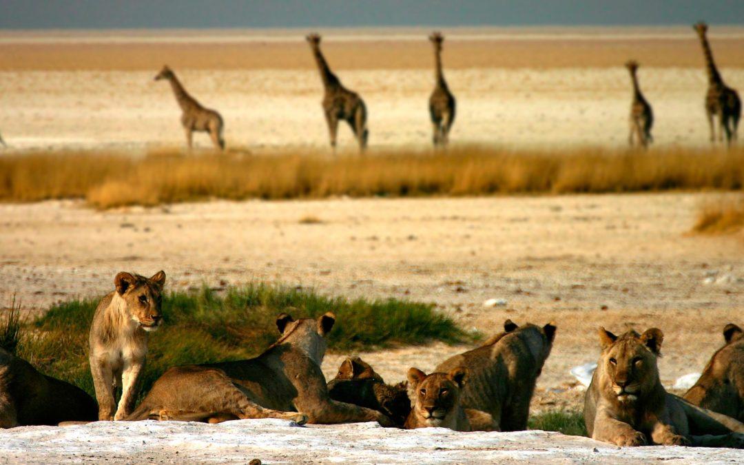 Warum Löwen keine Blätter fressen und Giraffen kein Steak… und warum du das wissen willst